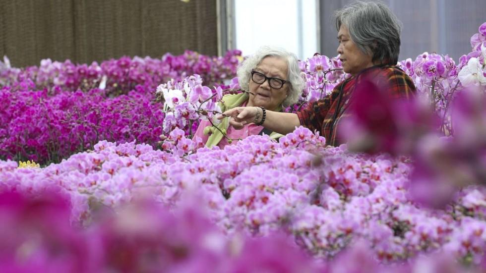orchidées hong kong