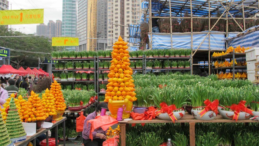 solanum Hong Kong