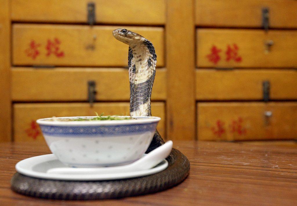 Soupe de serpent