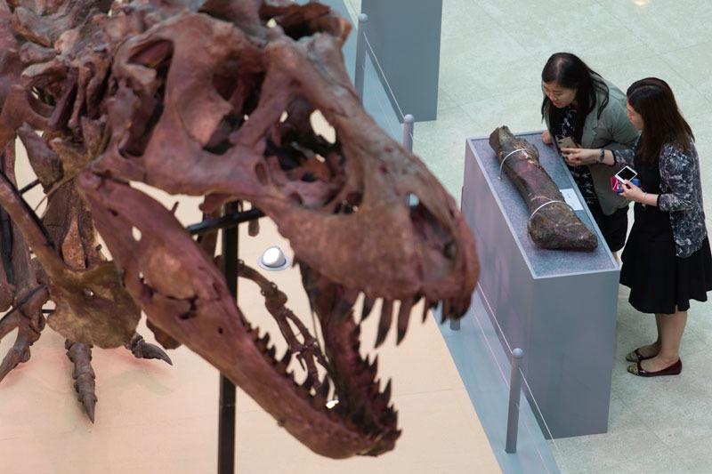 tyrannosaure hong kong