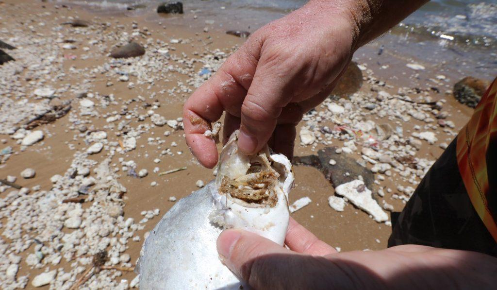 poisson mort plage