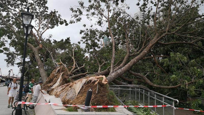 Aberdeen Promenade Pier arbres déracinés
