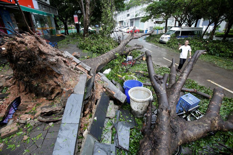 Arbres arrachés Shenzhen