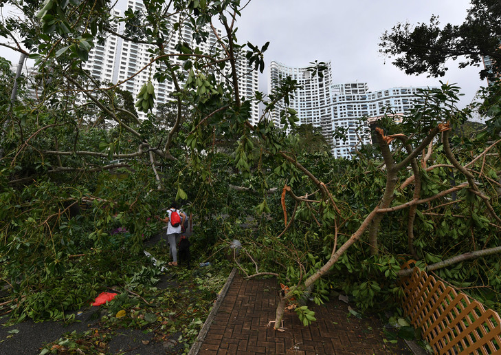 Des arbres abattus typhon Mangkhut
