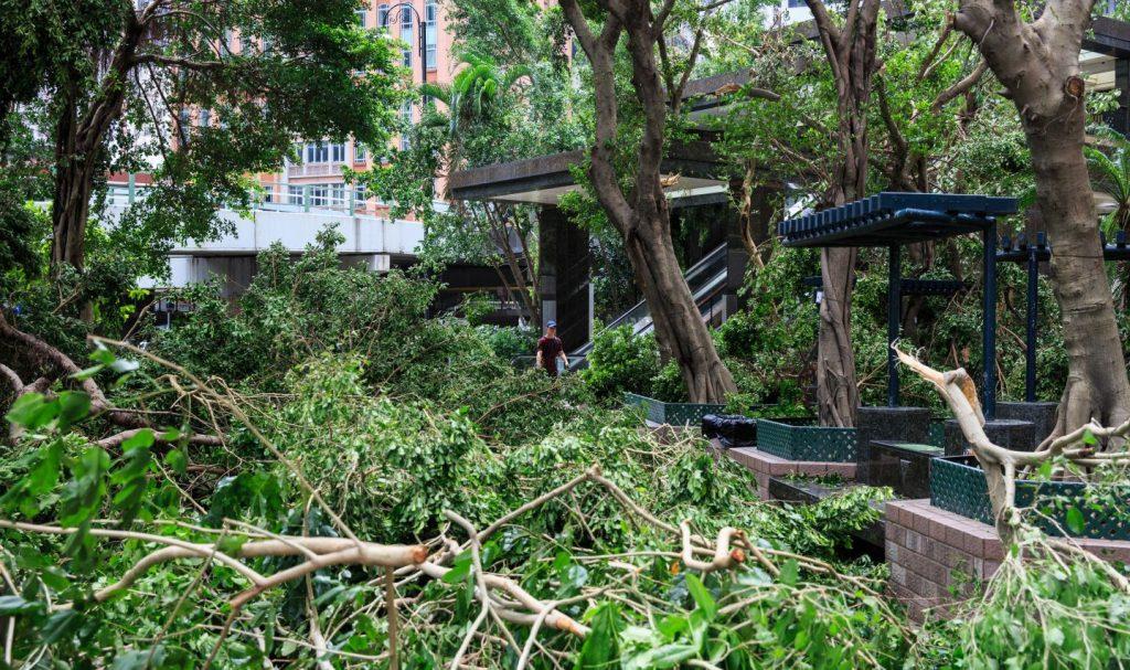 Parc Hong Kong arbres déracinés