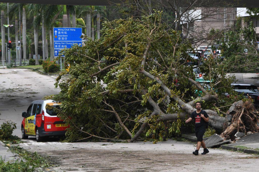 Un taxi écrasé par un arbre